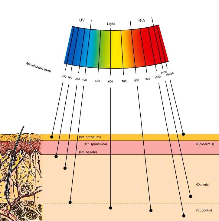 spectrum_en2